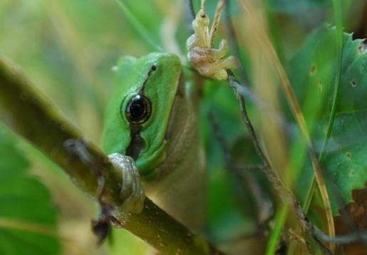 Froschkonzert im Egautal